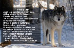 Dream interpretation of the wolf spirit animal