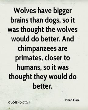 Brian Hare - Wolves have bigger brains than dogs, so it was thought ...