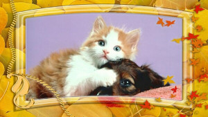 quotes about family pets