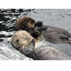 seaotter_hand_in_hand_together_greeting_card.jpg?height=250&width=250 ...