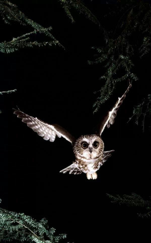 Night Owl,,Beautiful,,,,,