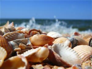 1920x1440 Sea Shells desktop PC and Mac wallpaper