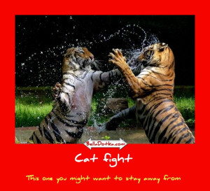 Cat And Dog Fight Very Funny Quotes Loves Fun World