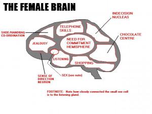 male brain vs female brain
