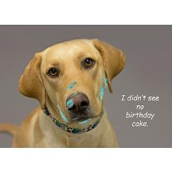 yellow_lab_cake_face_birthday_greeting_card.jpg?height=250&width=250 ...
