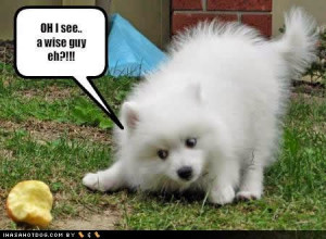 Funny dogs with sayings