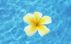 Flower Floating On Water Wallpaper #93611 - Resolution 1680x1050 px