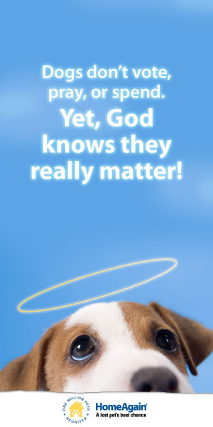 dogs quotes god pin dogs luv dogs jack russell terrier quotes dog ...