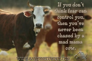 ... You Then You've Never Been Chased By A Mad Mama Cow - Cowboy Quote