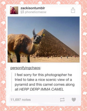 Funny Animal Quotes Camel