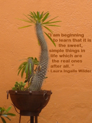 Quotes To Live By Pinterest Paula bradfield's quotes to