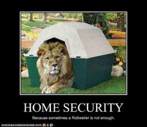 stupid funny lion sayings.