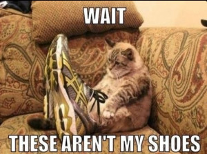 30 Funny animal captions - part 9, funny animal memes, funny animals ...