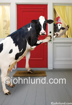 dance quotes funny. Cows Come Home Funny