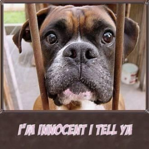 boxer dog quotes   Uploaded to Pinterest