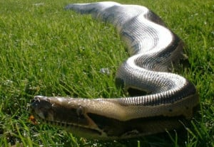 Snake In The Grass A snake in the grass by