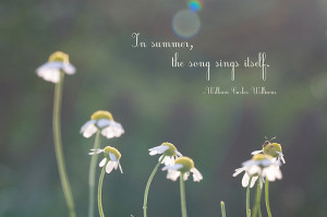 In Summer,the Song Sing Itself ~ Inspirational Quote