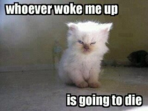 Most mornings, I wake up looking like this: