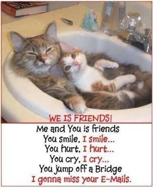 Cute Cats - cuteness Photo