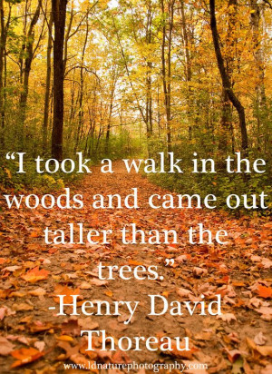 ... Henry David Thoreau #photography #nature #henrydavidthoreau #quote
