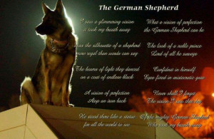 Shepherd Dogs, German Shepherd Poems, Amazing German Shepherd, German ...