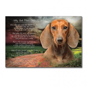 ... Animal Postcards >