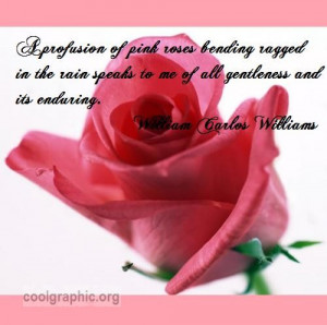 ... ://www.coolgraphic.org/quotes/rose-quotes/a-profusion-of-pink-roses