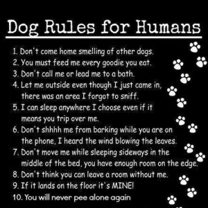 Filed Under: ALTMD Blog , Hilarious Hounds Tagged With: Dogs , Humor