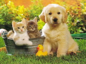dogs-and-cats-hd-dogs-and-cats-wallpaper-funny-pictures-tumblr-quotes ...