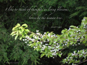 ... thoughts as living blossoms borne by the human tree. - James Douglas