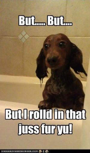 ... dachshund – Page 11 – Loldogs n Cute Puppies – funny dog