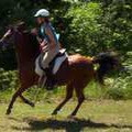 This bright bay mare has black legs, mane and ear tips. 2005 K ...