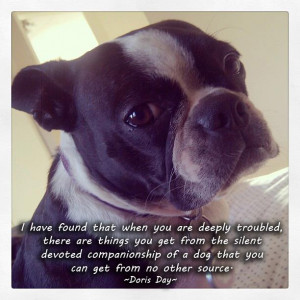Doris Day Quote about Dog Companionship
