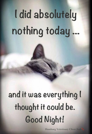 Sunday Humor   Animal funny   Cute cat   Relaxing   Taking it easy ...