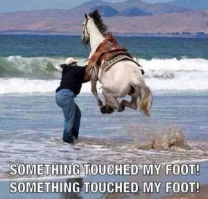 Touched My Foot - Return to Funny Animal Pictures Home Page