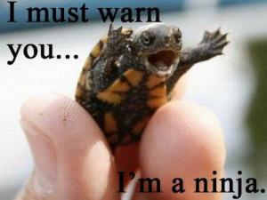 Ninja Turtle!