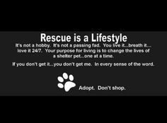 Adopt A Dog Quote Rescue is a lifestyle~