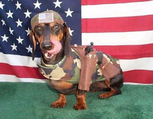 Free Flag Day MySpace Funny Pictures