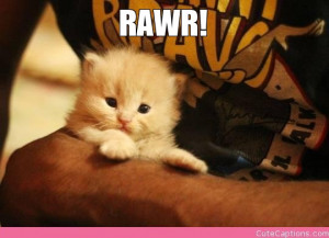 Cute Kitten Captions