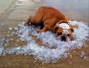 The Hot Weather Got Me Like… – 13 Pics