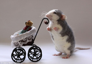 ... Families! Photographers uses pet rats to create everyday human scenes