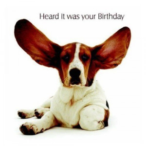 Basset Hound Dog Birthday Card