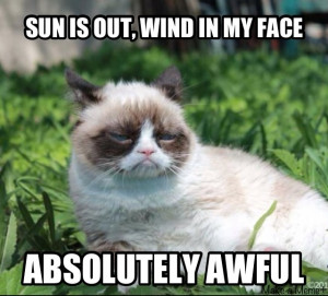 Top 40 Most Funny Grumpy Cat Images with captions #Captions