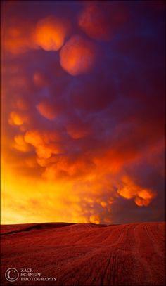 Mammatus Eruption by Zack Schnepf on 500px. Wheat field, Palous ...