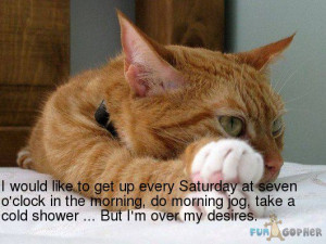 """thoughts on """" Feline Friday #19 """""""