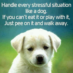dog's guide to dealing with Stress.
