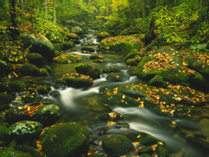 Roaring Fork, Timed Exposure, Great Smoky Mountains, Tennessee