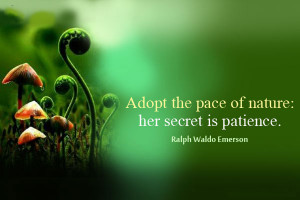 nature-quote-adopt-the-pace-of-nature-her-secret-is-patience