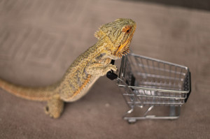 funny cute reptile lizard bearded dragon pringle