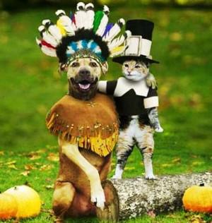 Funny Dog Costume Thanksgiving Pilgrim Picture